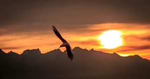 Schweizer alpe Stockfotografie