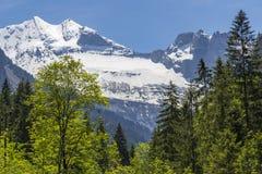 Schweizer Alpen gesehen durch Wald in Blausee oder im blauen Seenaturpark, die Schweiz Lizenzfreie Stockfotos