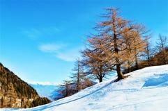 Schweizer Alpen und Winterlandschaft stockbild