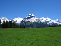 Schweizer Grasfeld und -berg Stockbild