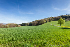 Schweizer Landschaft Lizenzfreie Stockbilder