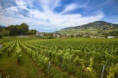 Schweizer Weinberglandschaft im Sommer lizenzfreie stockbilder