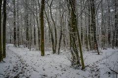 Schweizer Winterwaldgehende Spur nach neuen Schneefällen stockbild