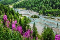 Schweizisk Fjälläng-flod gästgivargård och Pontresina Arkivfoton