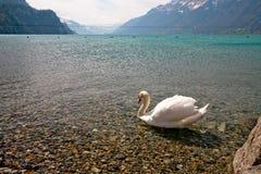 Schweizisk lake med en swan arkivfoto