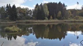Schweizisk skog Arkivbilder