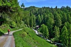 Schweiziska fjällängar, Resgia-sikt av cyklisten på vägen Royaltyfri Bild