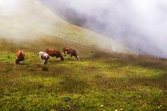 Schweiziska fjällängar, schweizaredimma och fyra schweiziska kor Arkivfoto