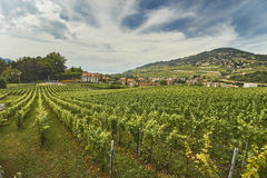 Schweiziskt vingårdlandskap i sommar Royaltyfri Fotografi