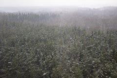 Schwere Schneefälle, Blizzard im Wald Stockbilder