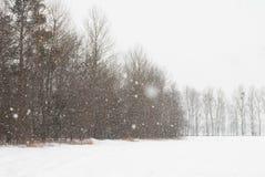 Schwere Schneefälle Hohe dünne dünne Bäume Lizenzfreie Stockfotos