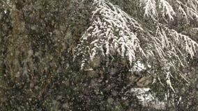 Schwere Schneefälle im Winter stock video footage