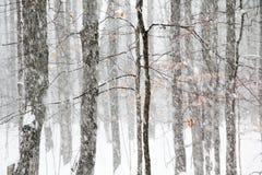 Schwere Schneefälle in Michigan-Holz Lizenzfreies Stockfoto