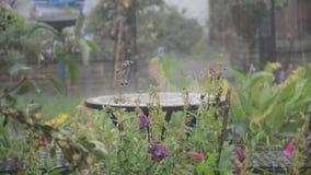 Schwerer Regenguß des Regens und des Hagels Lizenzfreies Stockfoto