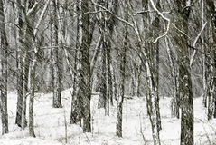 Schweres Schneien Stockfotografie