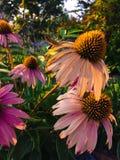 Schwermütige Blumen Stockfoto