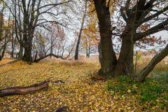 Schwermütige Herbstlandschaft Fast blattlose alte Eichenwaldung an einem bewölkten Abend Lizenzfreie Stockbilder