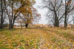 Schwermütige Herbstlandschaft Fast blattlose alte Eichenwaldung an einem bewölkten Abend Lizenzfreie Stockfotos