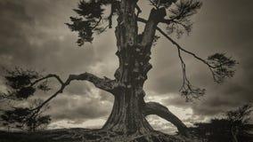 Schwermütiger Baum Lizenzfreies Stockbild