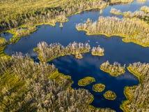 Schwermütiges Brummen-Foto des bunten Heidemoors im Frühsommer-Sonnenaufgang lizenzfreie stockfotos