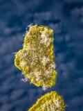Schwermütiges Brummen-Foto des bunten Heidemoors im Frühsommer-Sonnenaufgang lizenzfreie stockfotografie