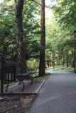 Schwermütiges Foto der Straße in einem Park, zwischen dem Holz - Desaturated, stockbild
