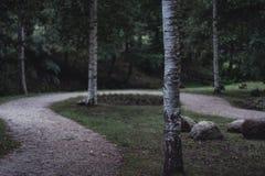 Schwermütiges Foto der Straße in einem Park, zwischen dem Holz - Desaturated, stockfoto