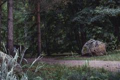 Schwermütiges Foto der Straße in einem Park, zwischen dem Holz - Desaturated, stockbilder
