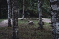 Schwermütiges Foto der Straße in einem Park, zwischen dem Holz - Desaturated, lizenzfreie stockfotos