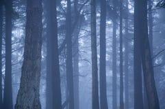 Schwermütiges Waldland Stockfotos