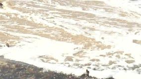 Schwerm?tiges Schwarzweiss-Clip der Zeitlupe von Wellen sto?en auf Felsen und Bruch bis zum Nebel zusammen stock video