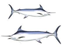 Schwertfische Lizenzfreie Stockfotografie