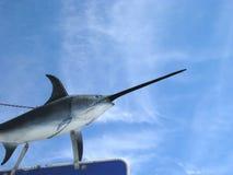 Schwertfische im Himmel Lizenzfreies Stockfoto