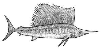 Schwertfischillustration, Zeichnung, Stich, Tinte, Linie Kunst, Vektor Stockbilder