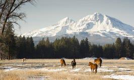 Schwester-Ranch Lizenzfreie Stockfotos