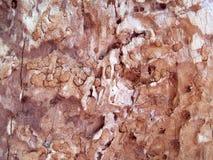 Schwieriges Detail des insektenbeschädigten Kirschbaums Stockbild