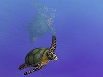 Schwimmen über Schildkröte Stockbild
