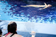 Schwimmen auf Wasser Stockfoto