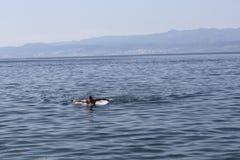 Schwimmen des jungen Mannes im adriatischen Meer Stockbilder