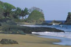 Schwimmen des schwarzen Mannes, Tobago Stockfotos