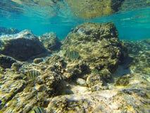Schwimmen durch ein Fishbowl Stockbilder