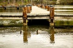 Schwimmen-Enten auf See mit Pier im Hintergrund stockbilder