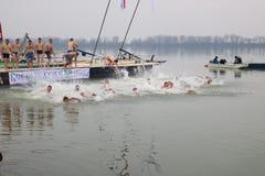 Schwimmen für ein Ehrenkreuz lizenzfreie stockfotos
