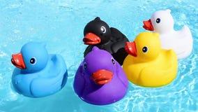 Schwimmen mit fünf buntes Gummienten entspannt und zufällig auf dem funkelnden Wasser stock video footage