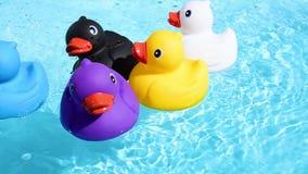 Schwimmen mit fünf buntes Gummienten entspannt und zufällig auf dem funkelnden Wasser stock footage