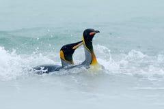Schwimmen mit zwei Pinguinen im Meerwasser Königpinguin, großer Vogel springt vom blauen Wasser beim Schwimmen durch den Ozean in Stockbild