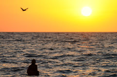 Schwimmen am Sonnenuntergang stockbilder