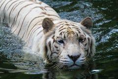 Schwimmen trhough stockfoto