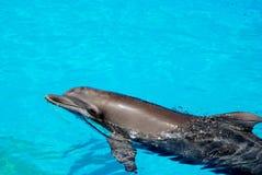 Schwimmende Delphine Lizenzfreie Stockbilder