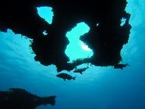Schwimmende Fische Stockfoto